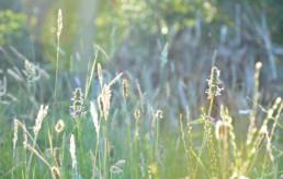 landschap biotoop